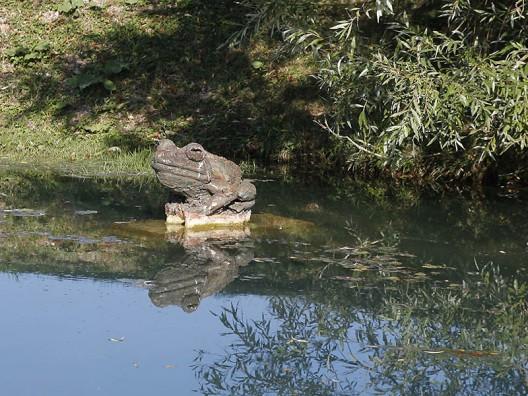 Sinibaldi :Grenouille-taureau